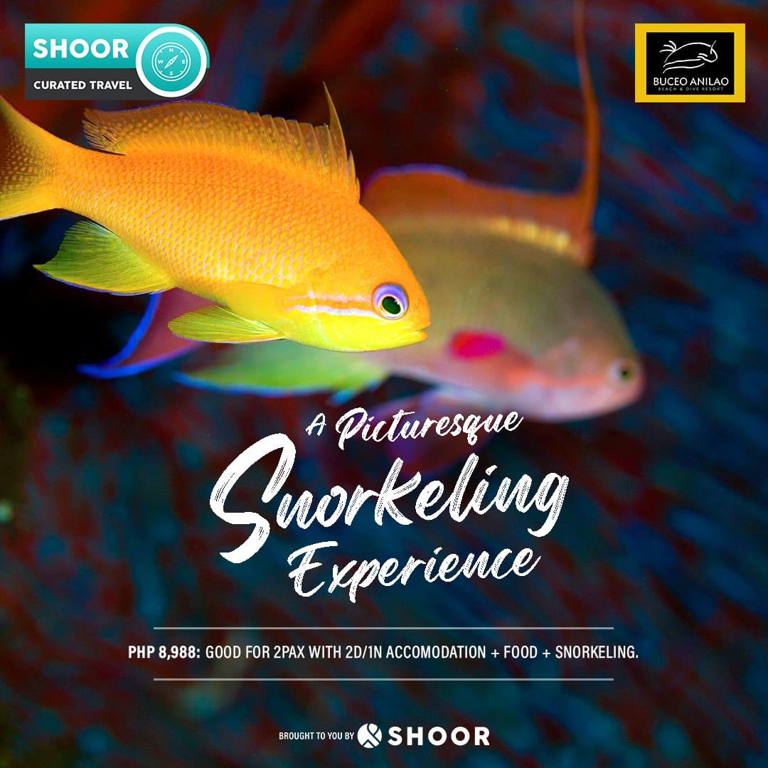 Snorkeling experience