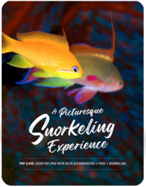 A Picturesque Snorkeling Experience